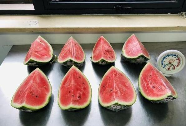用于实验的西瓜
