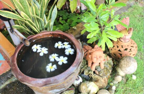 水缸里的鸡蛋花