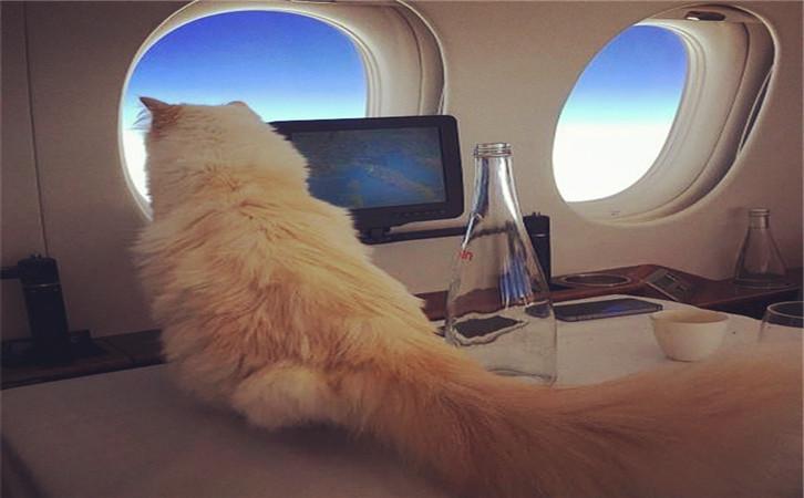 香奈儿老佛爷2亿遗产继承人是只猫?难以想象5